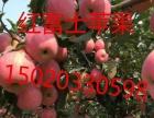 供应红富士苹果产地直销