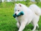 家庭宠物寄养春节预定中