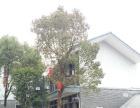 千岛湖酒店(民宿)物业出租