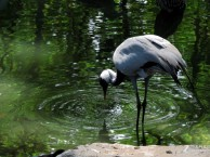阿城动物园一日游北方森林动物园门票多少钱动物园什么时候开放