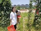 深圳宝安农家乐野炊可以享受大自然田园乐趣的团队户外团建好去处