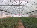 实用的蔬菜大棚工程配件哪里有,钢管大棚骨架价格