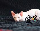华东区最大无毛猫基地 上海爱宠网品牌猫舍 多只挑选
