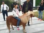 上海奉贤区出租羊驼-矮马转租-小香猪出租-公园草坪婚礼庆典