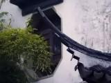 河北裕隆瓦业青砖青瓦琉璃瓦连锁瓦红瓦瓷瓦陶土瓦灰瓦片屋面瓦