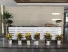 绿植租摆 室内绿植租赁 花卉租摆