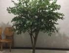 仿真桂花树金桂带花庭院绿化用人造真杆假花树中式商场落地假绿植