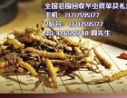 野生冬虫夏草多少钱一克 黑龙江回收极草 回收 头条新闻K3