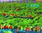 平谷渔阳滑雪场门票 采摘草莓 农家院 中餐一日游