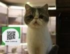 东莞哪里有加菲猫出售 东莞加菲猫价格 东莞宠物狗出售信息