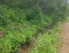 台岩村10000平土地