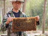 美容养颜农家蜂花粉 纯天然正品茶花粉 pk 破壁荷花粉蜂产品包邮
