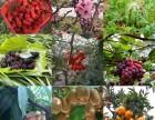 金秋旅游 推荐上海农家乐一日游 采桔子钓大闸蟹 烧烤吃土菜