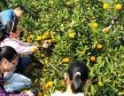 上海采户外桔子去哪里?上海周边户外采桔子基地收集