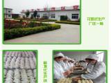巧味食品系列 水饺 馄饨 加盟 快餐 小吃店