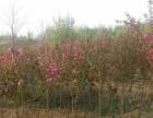 出售庄河北城区其他果园地转租转让可养殖种植