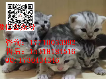 萌宠豹猫宠物店