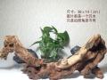 珊瑚木 天然沉木 金丝红木 沉木 造景素材