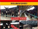 大型养驴场供应肉驴品种 德州驴生长快
