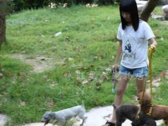 超大笼-伙食好宠物寄养 每天都有狗狗活动