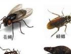 专业防治老鼠、蟑螂、白蚁、苍蝇、蚊子、害虫等公司
