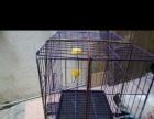 狗笼子中小型犬和宠物猫笼子