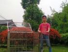 全新不锈钢狗笼厂家直销 拒绝死亡带病菌不锈钢狗笼