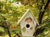 彩绘鸟屋、木制鸟屋、木制鸟笼、木制喂鸟器