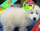 实物拍摄——三证齐全——可送货上门—大白熊幼犬