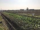 17帮农共享农场 种菜 采摘+亲子游