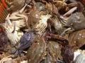 舟山市渔人洲海洋旅游发展有限公司朱家尖出海捕鱼