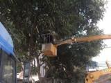 广州树木修剪哪家园林绿化公司会比较专业