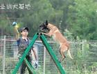 宠物犬训练 工作犬护卫犬训练