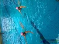 昆明专业成人游泳培训