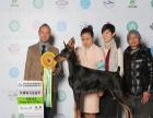 中国登陆冠军杜宾犬后代血统证书可查询