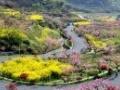 垂云通天河、阳山畈山花节一日游