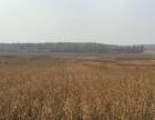 现有哈尔滨市巴彦县低价出租750亩旱地