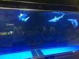 海狮海豹表演租赁 企鹅出租 海洋生物展租赁