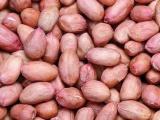 苏北农家新收手剥白花生仁 生花生米油料花生新鲜 2013年新货