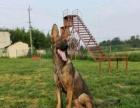 成都鼎立犬業寵物訓練 基地
