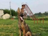 成都鼎立犬业宠物训练 基地