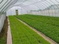 泸州泸县方洞镇300亩蔬菜基地低价转让
