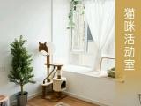 星光猫乐园CFA家庭繁育猫舍英国短毛猫正加白三花妹妹