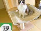 沈阳哪里有布偶猫出售 沈阳布偶猫价格 沈阳宠物猫转让出售