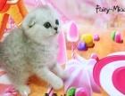 Fairy-miao猫舍小渐层找家长