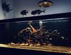 魚缸維護 水族箱設計 魚缸造景