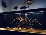专业订做大型鱼缸 河南郑州大型鱼缸订做、海鲜池定做