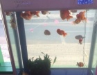 各种鱼缸便宜出售