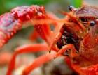 养殖小龙虾是该如何合理补钙