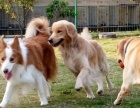 广州粤虎宠物狗狗训练学校、欢迎来电
